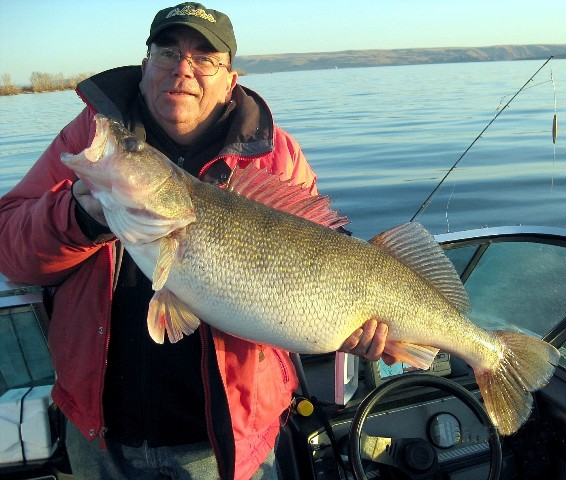 Viewing a thread another near record walleye for washing for Walleye fishing columbia river